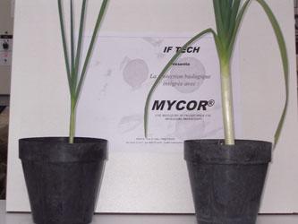 Sans MYCOR® / Avec MYCOR®
